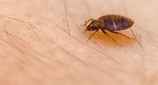 Bed Bug Removal North Carolina